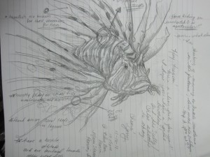 """lion fish facts and stats"""